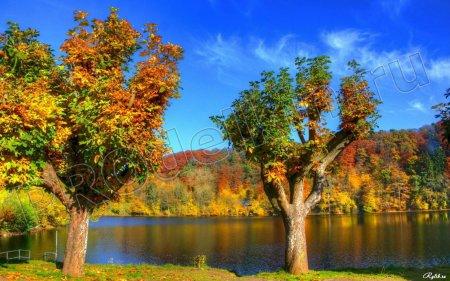 Деревья  грунтовые воды